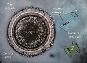微 / 纳米机器人在生物医学中的应用进展